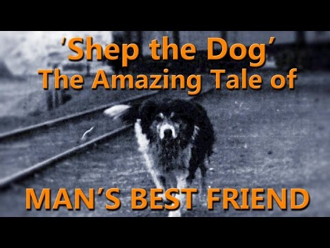 A Postcard From the Field: The Story of Shep the Dog | Dateline NBC