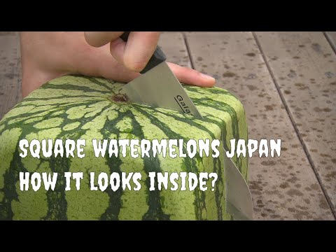 Square watermelons Japan. How it looks inside? English version.