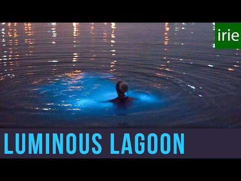 Luminous Lagoon Jamaica. Glowing Water Experience. Glistening Waters. Jamaica Video Guide
