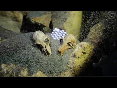Enormous Underwater Fossil Graveyard Found