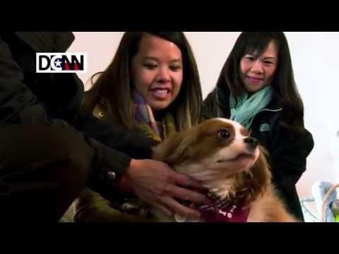 Nina Pham reunites with Bentley