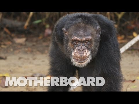 The Real Planet of the Apes (Documentary)