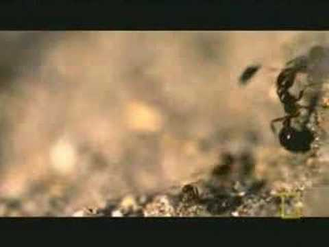 Flies own ants