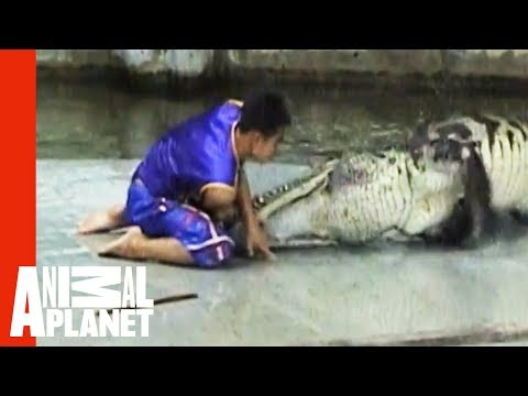 Man Caught In Crocodile Death Roll | Untamed & Uncut