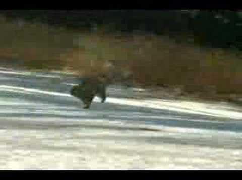 GEICO- Squirrel Commercial