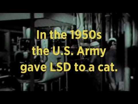 LSD and Cats | Retro Report Mini Doc