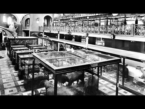 Skin & Bones - Meet the Scientist: William Temple Hornaday