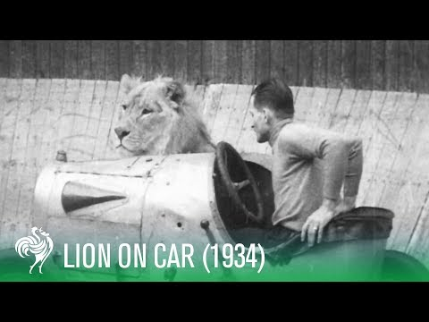 "Lion On Car Rides ""The Wall of Death"" (1934) 