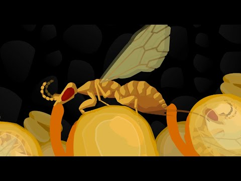 Fig Wasp Story