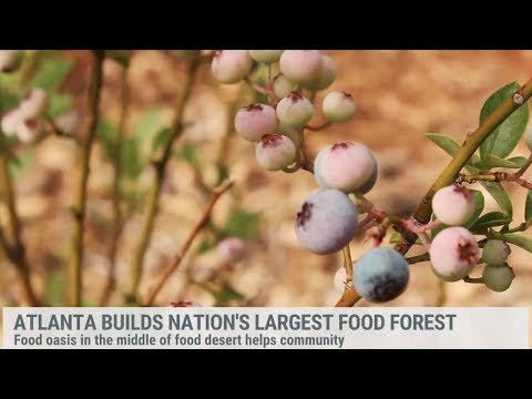 The Largest Food Forest in the U.S.