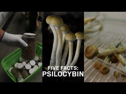 Five Facts: Psilocybin mushrooms