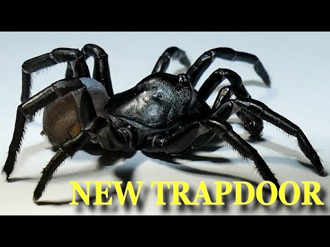 New 'Pine Rockland Trapdoor Spider' Discovered And Can Live For Decades