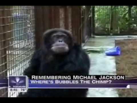 Does Bubbles the Chimp Miss Michael?
