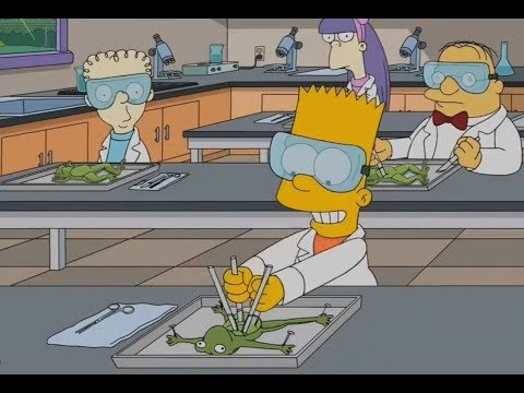 The Simpsons-The Way Bart Dissects Frogs!