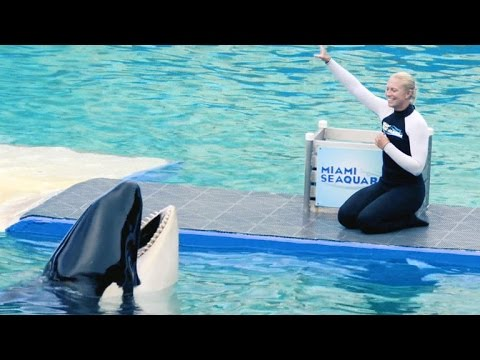 Activists push to free endangered orca Lolita from theme park