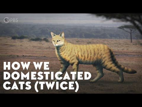 How We Domesticated Cats (Twice)