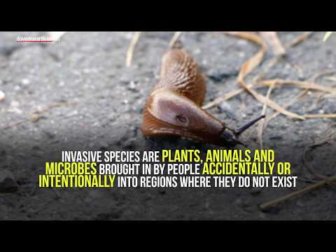 Threat of invasive alien species is increasing worldwide: International study