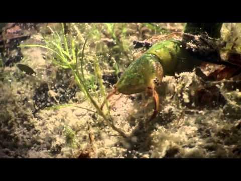 David Attenborough Origin of Life, Conquest HD BBC Documentary Animals & Nature 5