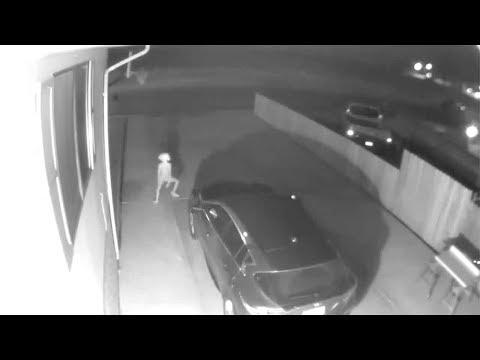 CCTV Captures Dobby On Driveway