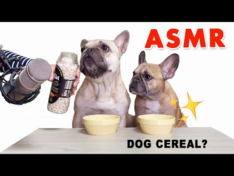 ASMR French Bulldog Eats Real Cereal l 씨리얼 ASMR
