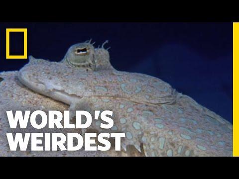 Flounder is Master of Disguise | World's Weirdest