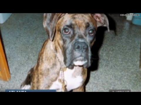 Hero dog dies saving boy from moving car