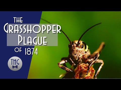 The Great Kansas Grasshopper Plague of 1874