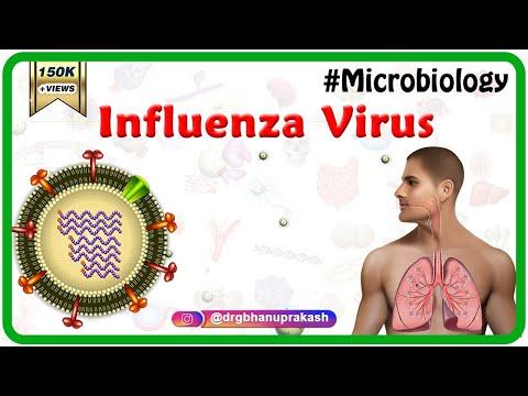 Influenza Virus Microbiology Animation