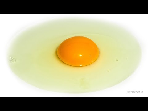 Egg Time-lapse
