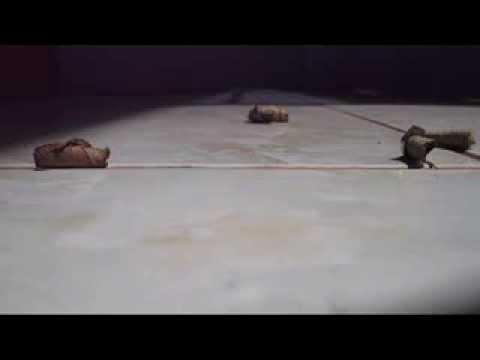 Jumping Caterpillars Group