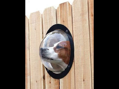 Review: PetPeek Fence Window for Pets