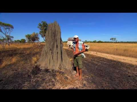Magnetic Termite Mounds - Nature's Compass ► All 4 Adventure TV