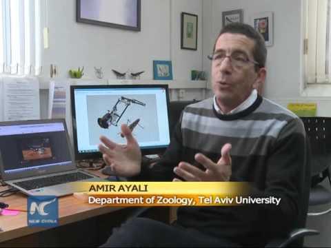 Locust robot in Israel