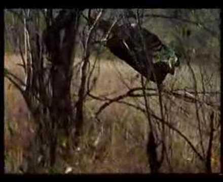 Unbelievable Leopard Hunt