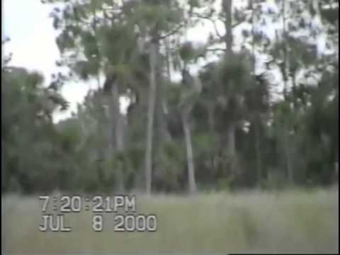 Dave Shealy's 2000 Skunk Ape Footage