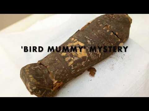'Bird mummy' mystery - solved