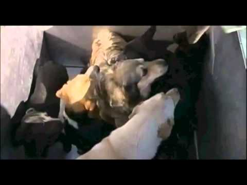 Shelter Gas Chamber: Raw Footage