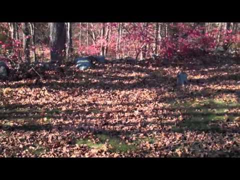 Union Cemetery: Easton, CT Part II
