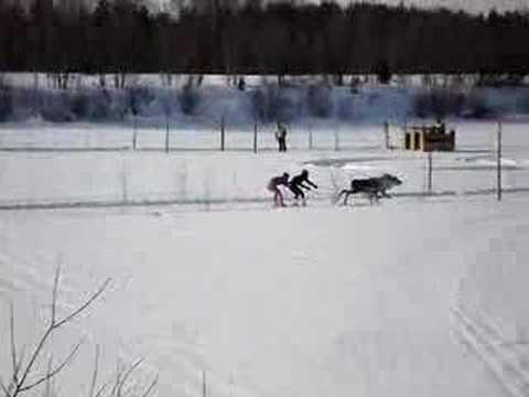 Reindeer Racing