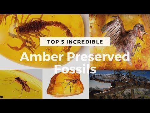 Top 5 Myanmar Amber Preserved Fossils | Million years old Preserved Dinosaur | Weirdest Fossils