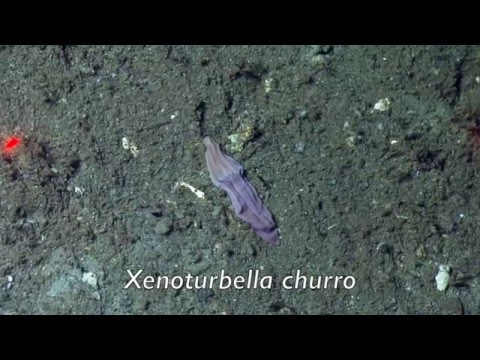 Extraordinary Deep-Sea Worm Species Discovered