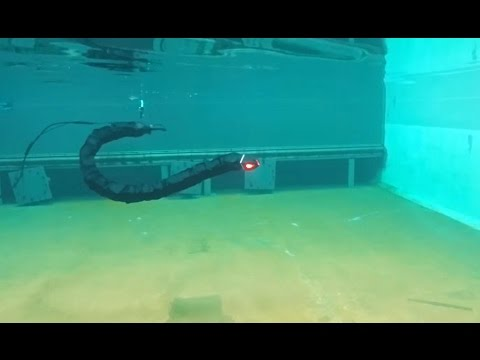 Swimming robot for maintenance and inspections