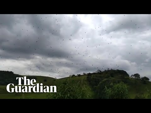 Cloudy with a chance of arachnophobia: raining spiders in Brazil