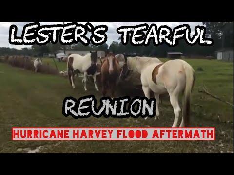 Tearful Reunion with farm animals after Hurricane Harvey flooding