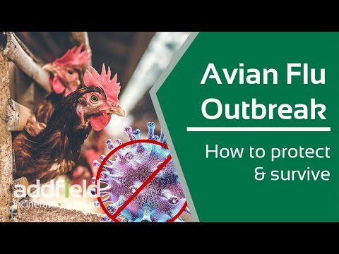 How to Prevent and Survive Avian Flu