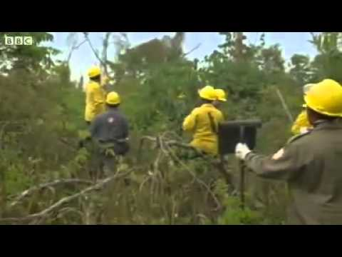 How do Brazilian firefighters tackle blazes in the vastness of the Amazon rain forest