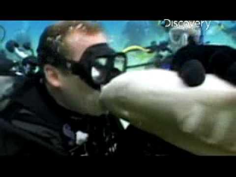 Adrenaline Rush: Shark Bite Kiss