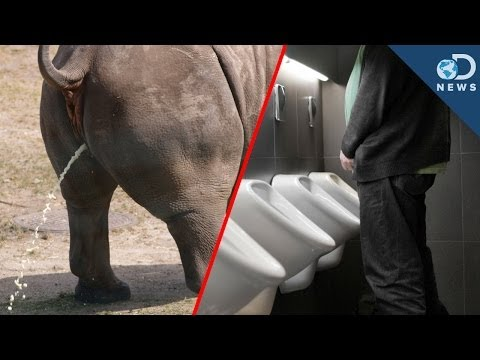 Why All Mammals Pee For The Same Amount Of Time