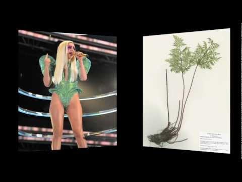 Duke University Biologist Names 19 Species of Ferns for Lady Gaga