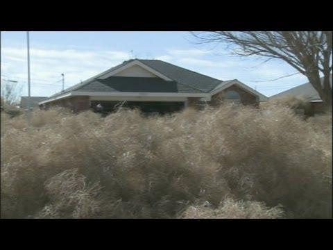 Tumbleweeds bury Roswell homes